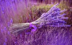 bunch-lavender-1680x1050